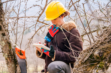 Arborist Business Management Software
