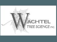 wachtel tree service
