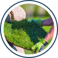 lawn-services software