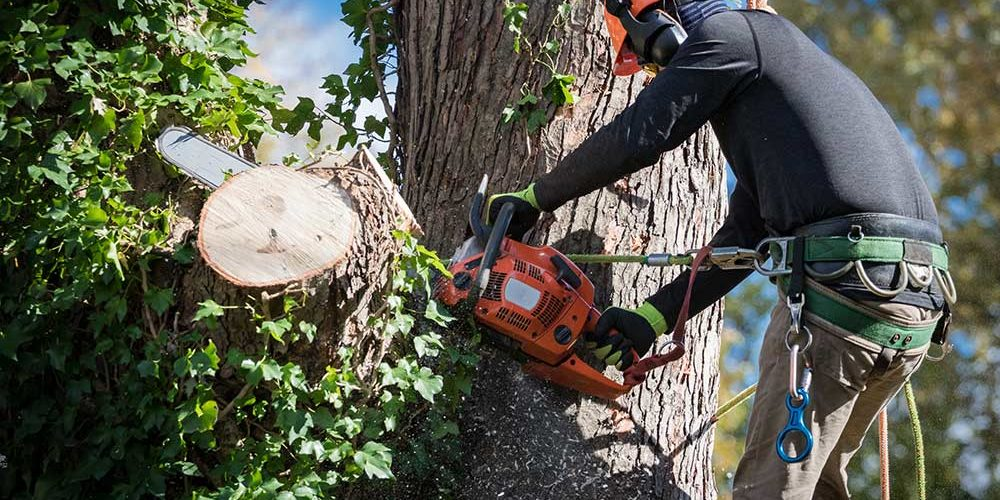 Starting Tree Service Business